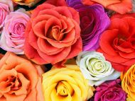 Love Blooms Roses, Bunch of Flowers