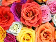 desktop wallpapers » flowers backgrounds » love blooms, roses » www