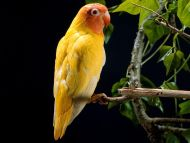 Must see Wallpaper Love Bird - lovebird  Graphic_931874.jpg