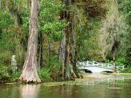 Magnolia Plantation Gardens, Charleston, South Carolina