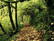 maple-lined-silver-creek-trail_silver-falls_oregon.jpg