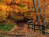 Mccormick Creek State Park, Indiana