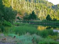 Desktop Wallpapers » Natural Backgrounds » Meadow » Www