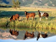 Meeting at the Watering Hole