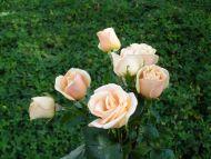 Miniature Pink Rose Bouquet