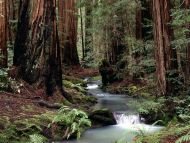 Montgomery Woods State Reserve, California