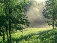 Morning Meadow, Edwin Warner Park, Nashville