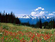 Mount Revelstoke National Park, Revelstoke, British Columbia