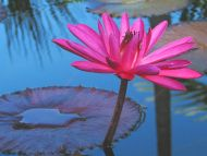 Nice Water Flower