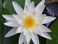 Nice White Flower
