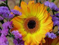 orange-flower-5d