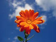 Orange in the Sky