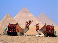 Parking Lot, Camels, Giza, Egypt