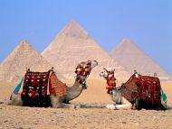 Parking Lot, Camels, Giza, Egypt