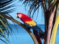 اجمل صور الببغاء  Parrot-5