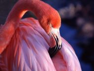 Pink Flamingo.jpg