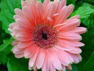 Desktop wallpapers flowers gardens backgrounds page 32 www pink flower mightylinksfo