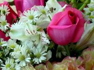Pink Rose with Gerbera Daisy