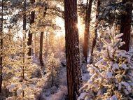 Ponderosa Starburst, Fremont National Forest, Oregon