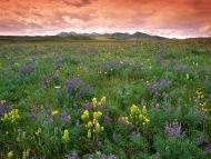 Prairie Flowers, Near East Glacier Park, Montana