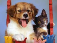 Pretty Puppy and Calico Kitten