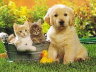 Desktop Wallpapers Animals Backgrounds Puppy Dog Www