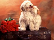 love puppy code