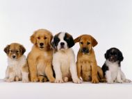 Puppy Potpourri