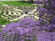 Desktop Wallpapers Natural Backgrounds Purple Garden