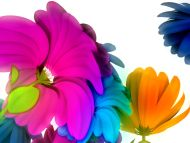 Rainbow Colour Flowers