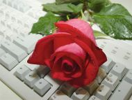 Red N Wet Rose on the Keyboard