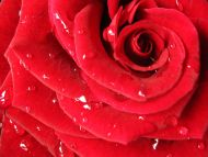 Red Rose Wallpaper Pattern