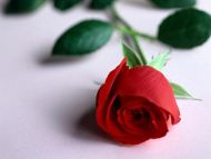 Red Rose with Green Leafs