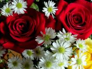 Red Roses with Gerbera