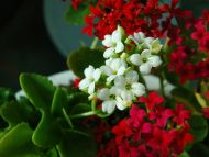 Desktop Wallpapers Flowers Backgrounds Red White Flowers Www