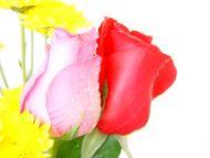 Desktop wallpapers flowers backgrounds red yellow pink roses red yellow pink roses mightylinksfo