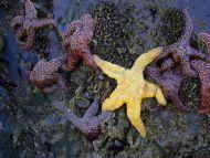 Rock Star Fish