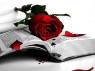 Rose Bleeding on the Book