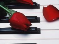 Rose Bud on a Piano