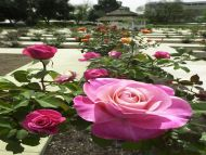 Desktop Wallpapers Flowers Backgrounds Rose Garden