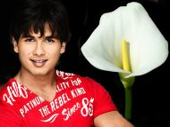 desktop wallpapers » shahid kapoor backgrounds » shahid kapoor » www