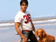 Desktop Wallpapers Shahid Kapoor Backgrounds Shahid Kapoor Www