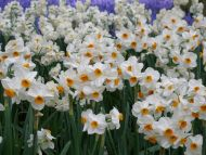 Desktop Wallpapers Flowers Backgrounds Small White Flowers Www
