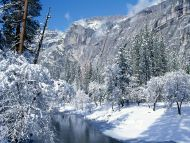 Snow Flocks Yosemite National Park, California
