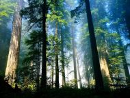 Sunlight and Trees
