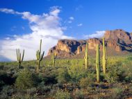 Superstition Mountains, Tonto National Forest, Arizona