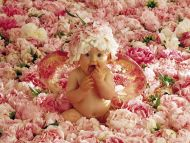 desktop wallpapers » babies backgrounds » sweet baby in the flowers