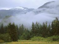 Temperate Rain Forest, British Columbia, Canada