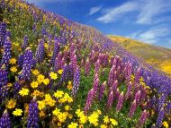 The Scent of Spring, Gorman, California