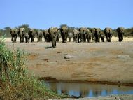 To the Watering Hole, Elephants, Africa